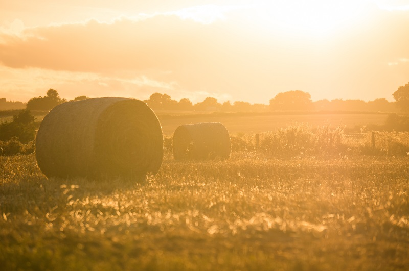 Farmland prices holding steady, unlikely to improve until after Brexit